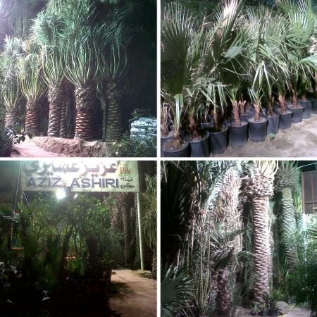 gardening centre kuwait
